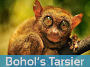 Tarsier Travel Agency Bohol